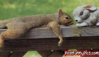 post-funny-pics-0889