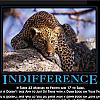 indifference by admin